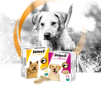 Veloxa worming treatment for dogs