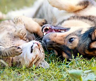 Cat and dog playing together on grass
