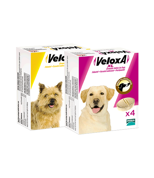 VELOXA deworming tablets for dogs pack shots