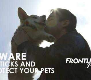 Beware of ticks FRONTLINE Plus video man kissing his corgie dog