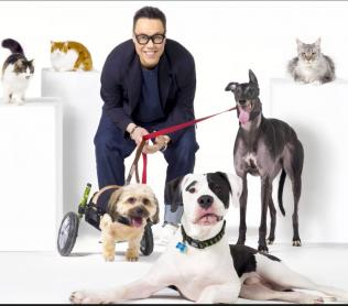 Gok Wan in a studio with three dogs and three cats